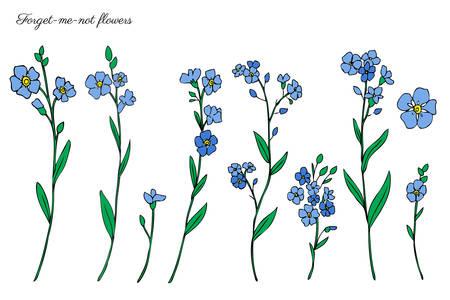 Vergeet-mij-nietje bloemen vector illustratie geïsoleerd op een witte achtergrond, kleurrijke inkt schets, decoratieve kruiden doodle, zeer fijne tekeningen voor ontwerp geneeskunde, huwelijksuitnodiging, wenskaart, bloemen cosmetica