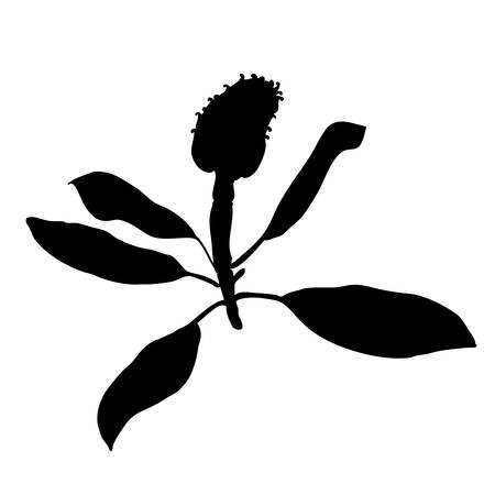 Artichoke vector black silhouette isolated on white background, graphic herbal decorative plant, Organic food ingredient illustration, for design healthy market, restaurant menu, cosmetic