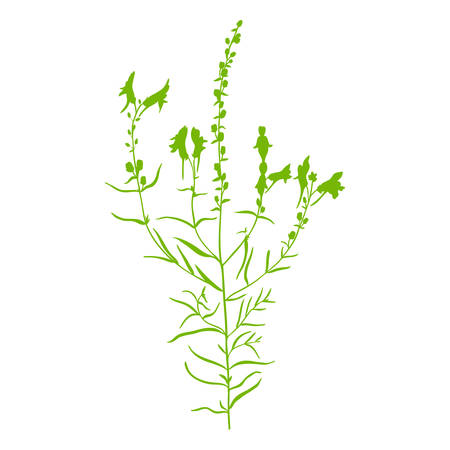 Linaria vulgaris, common toadflax, yellow toadflax or butter-and-eggs is a species of toadflax, snapdragon, Plantaginaceae family, hand drawn vector illustration, doodle silhouette flower isolated on