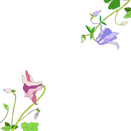 Aquilegia or Columbine flower hand drawn colorful vector botanical illustration, floral frame isolated on white background, decorative border for design greeting card, wedding invitation, cosmetics