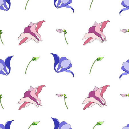 Aquilegia or Columbine flower hand drawn colorful vector botanical illustration, seamless floral pattern isolated on white background for design greeting card, wedding invitation, natural cosmetics