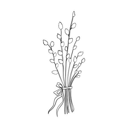 Hand drawn willow branch, symbol of Happy Easter, vector ink sketch illustration isolated on white, decorative floral bouquet verba with bow line art vintage herbs for design greeting card, invitation