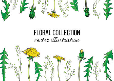 Dandelion flower, Capsella plant hand drawn vector ink color sketch isolated on white backdrop, Decorative graphic floral frame for natural cosmetic, design package tea, florist shop, wedding invite