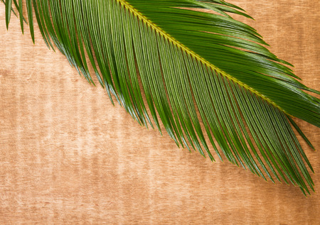 cycas: Green leaf of palm tree on wooden background
