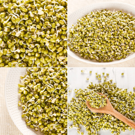 Mung beans sprouts  photo