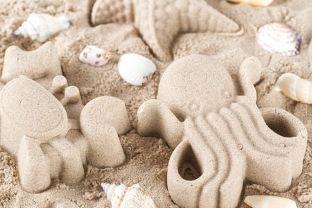 children crab: Sand crab and octopus and  sea shells on the sea beach