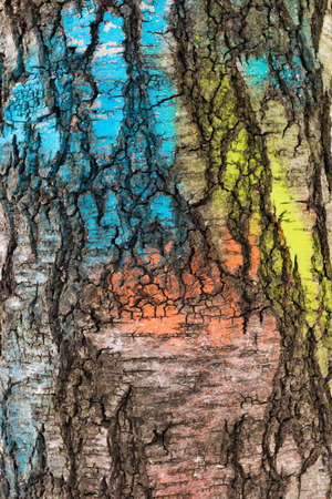 Texture of birch bark, painted in different colors. Old tree trunk with a broken bark. Texture closeup of tree bark. Background of bark tree.
