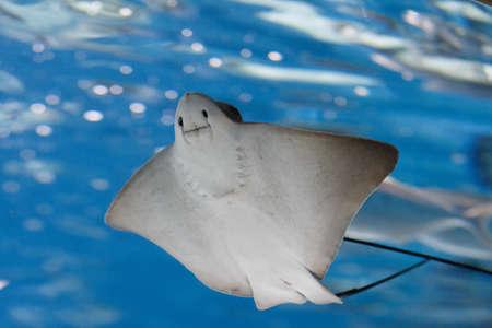 바다 가오리와 해양 생물. 물고기와 산호가있는 해양 수족관. 해양 생물.