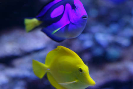 Marine aquarium with fishes and corals. Marine life. Stock Photo