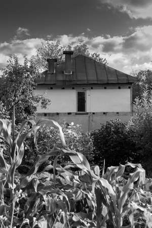 Little old private house in the bush. Dilapidated private house in the thickets of corn. Abandoned private house in an overgrown garden. Russia Stock Photo