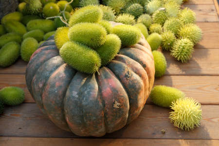 Composition of wild cucumber and pumpkin on a wooden background. Autumn harvest Stock Photo