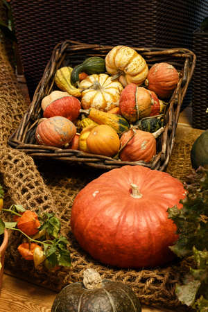 Autumnal decoration with pumpkins. Different kinds of pumpkins in sunshine. Offer at weekly market in autumn. Colorful pumpkins collection on the autumn market. Basket with pumpkins