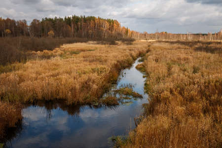 Beautiful autumn landscape of Russian nature. Autumn landscape. A golden field with a stream and forest on the horizon Stock Photo