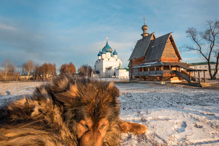 Shaggy dog. The big shaggy mongrel in Suzdal. The Suzdal Kremlin. Church of St. Nicholas. Ancient wooden Russian church in winter. Russia, Suzdal. The Golden Ring