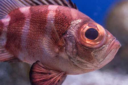 Underwater image of colorful, exotic fish in an aquarium.