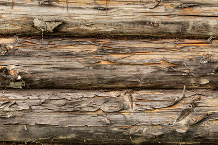 Pine logs. Log wall Texture of natural pine logs. Brown natural wood texture. Pine tree in construction.