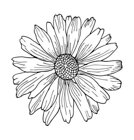 Black outline wild flower element for design. Hand-drawing chamomile isolated on white background vector illustration.