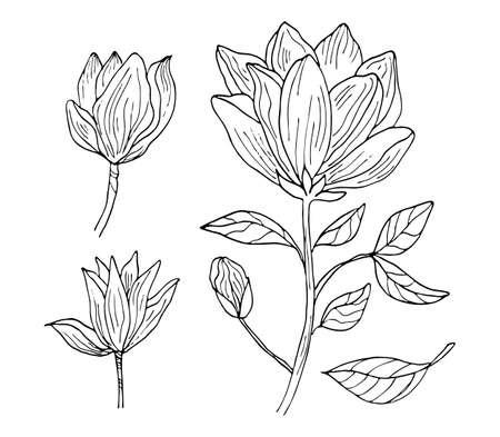 Hand drawing black outline botanical set vector illustration. Magnolia tropical flower blossom isolated on a white background. Illusztráció