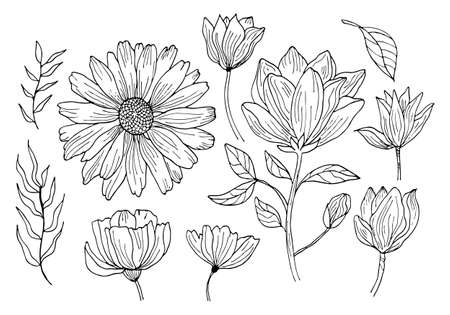 Hand drawing black outline botanical vector illustration. Chamomile and poppy flowers and leaves set isolated on a white background. Illusztráció