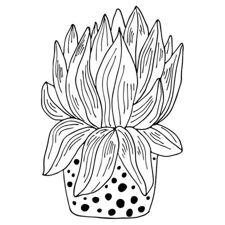 Black outline indoor plant with large leaves in modern pot isolated on white background. Vector hand drawn botanical illustration.