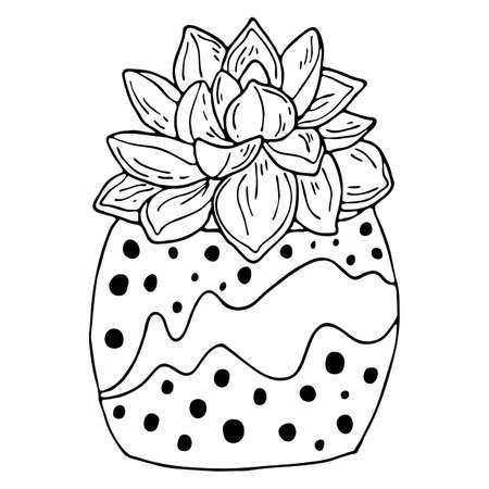 Black outline succulent indoor plant in modern pot isolated on white background. Vector hand drawn botanical illustration.