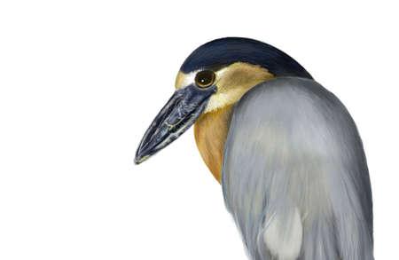 Bird paintings Stock Photo
