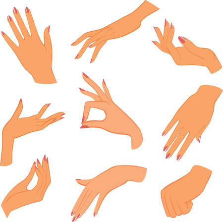 fingers:  set woman hands Illustration