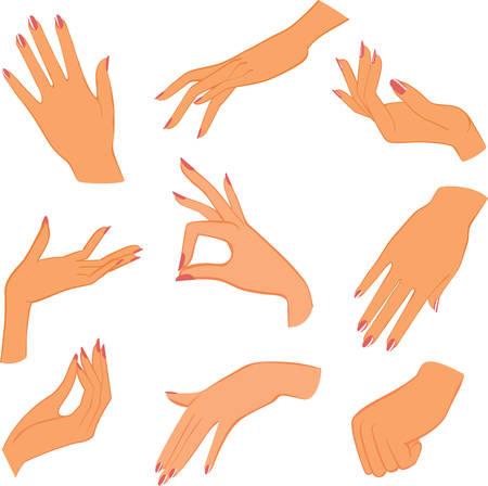 female sign:  set woman hands Illustration