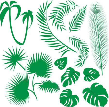 palm leaf:   set green leaves Illustration