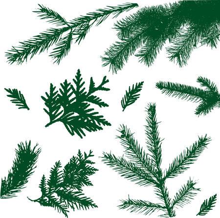 evergreen branch: establecer la ilustraci�n de �rbol de rama de silueta