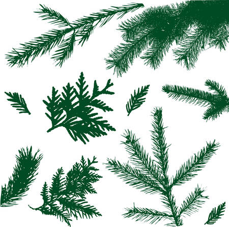 evergreen: set silhouette branch tree illustration Illustration