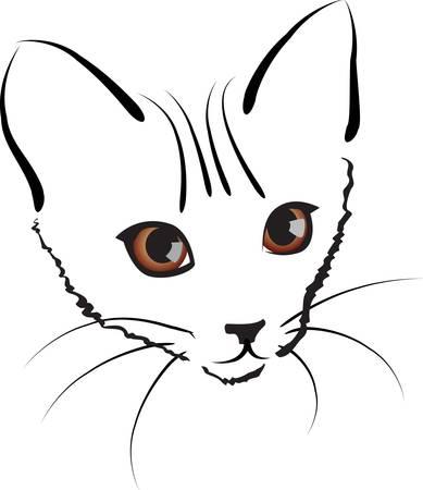 domestic: cute kitty