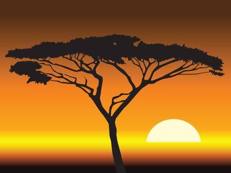 paisagem: african sunset background.vector illustration Ilustração