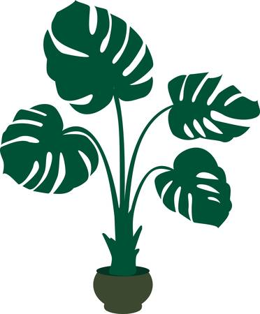 green monstera plant background. Colorful vector illustration Vector