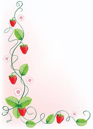 scroll border: Ripe strawberries and green leaves with flowers . Vector illustration border
