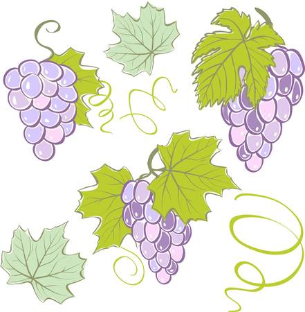 Creative grapes set elements. Colorful vector illustration Vector