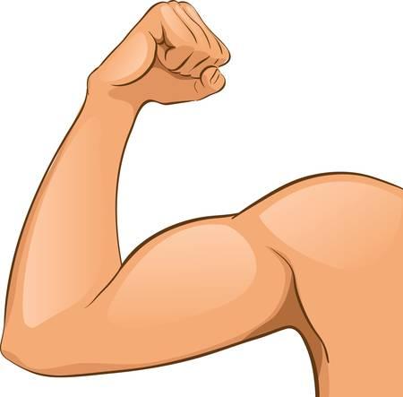 main sur l epaule: Muscles du bras de l'homme (24). Jpg Illustration