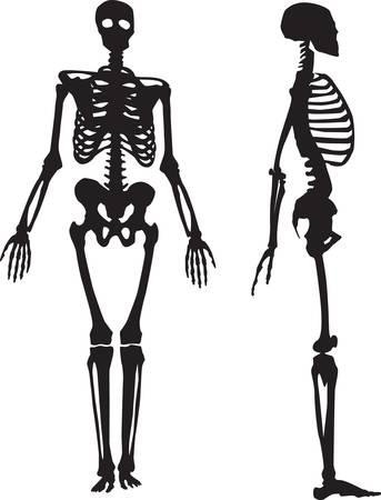 huesos: Silueta de un esqueleto humano Vectores