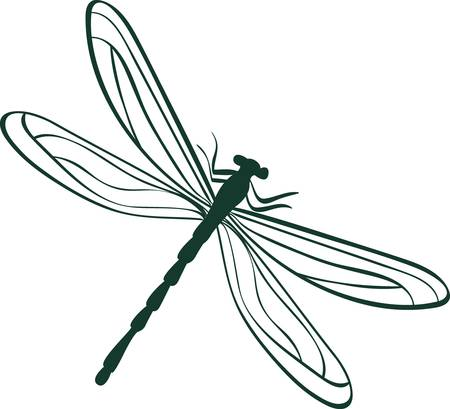 dragonflies: abstract dragonfly  Abstract illustration
