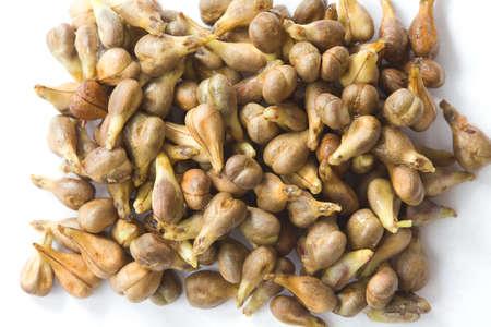 grape seeds on white background macro closeup Stockfoto