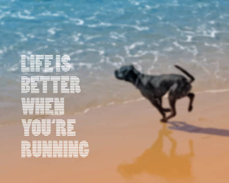 jumping: dog running on the beach. Blurred vector background
