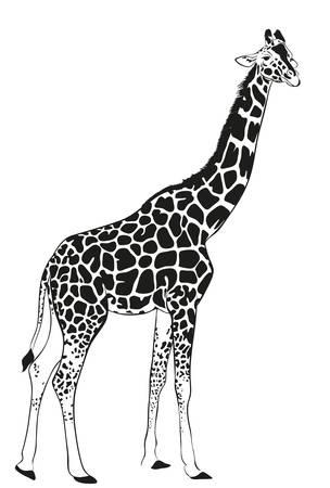 giraffe zwarte silhouet, abstracte dierlijke illustratie. Vector Illustratie