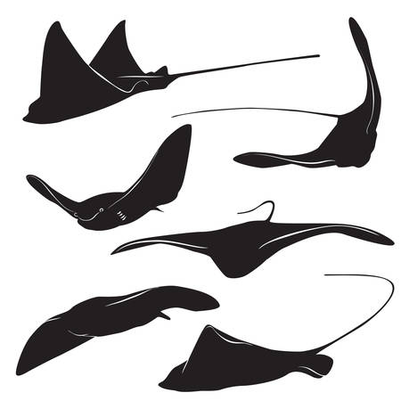 Set of stingray silhouette and icons in simple style. vector illustration.