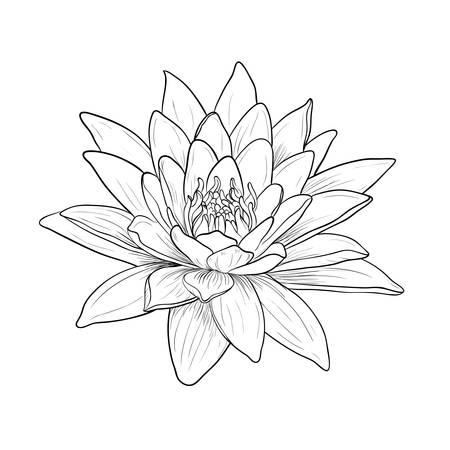 Floral Water Lily. Vector line style Illustration