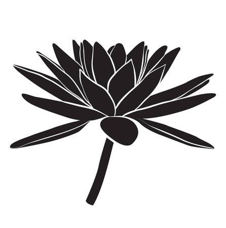 Floral del lirio de agua. estilo de línea vectorial Ilustración de vector