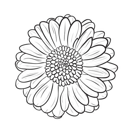 gently: Chamomile Gerbera flower for design, Vector illustration Illustration