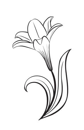 Lily flower vector icon Illustration