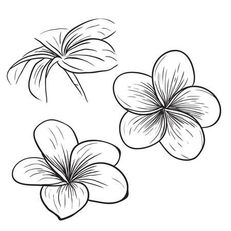 Plumeria frangipanier fleur tropicale icône