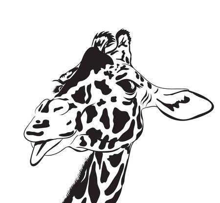 Girafkop. vector