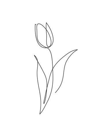 Grafika liniowa kwiat tulipana. Minimalistyczny rysunek konturowy. Grafika w jednej linii